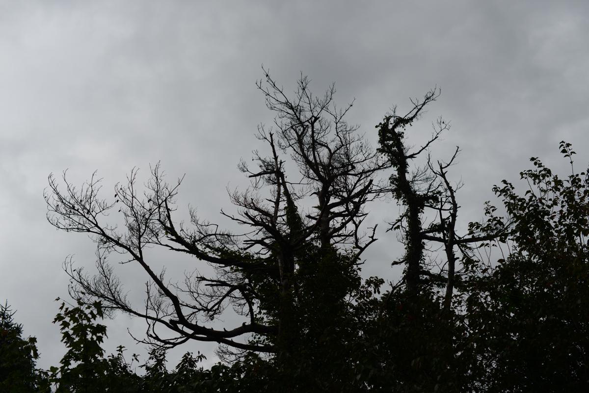 ikoi20181002-13 樹木医さんがやってくる!10月20日は五頭山麓いこいの森へ! 五頭山麓いこいの森