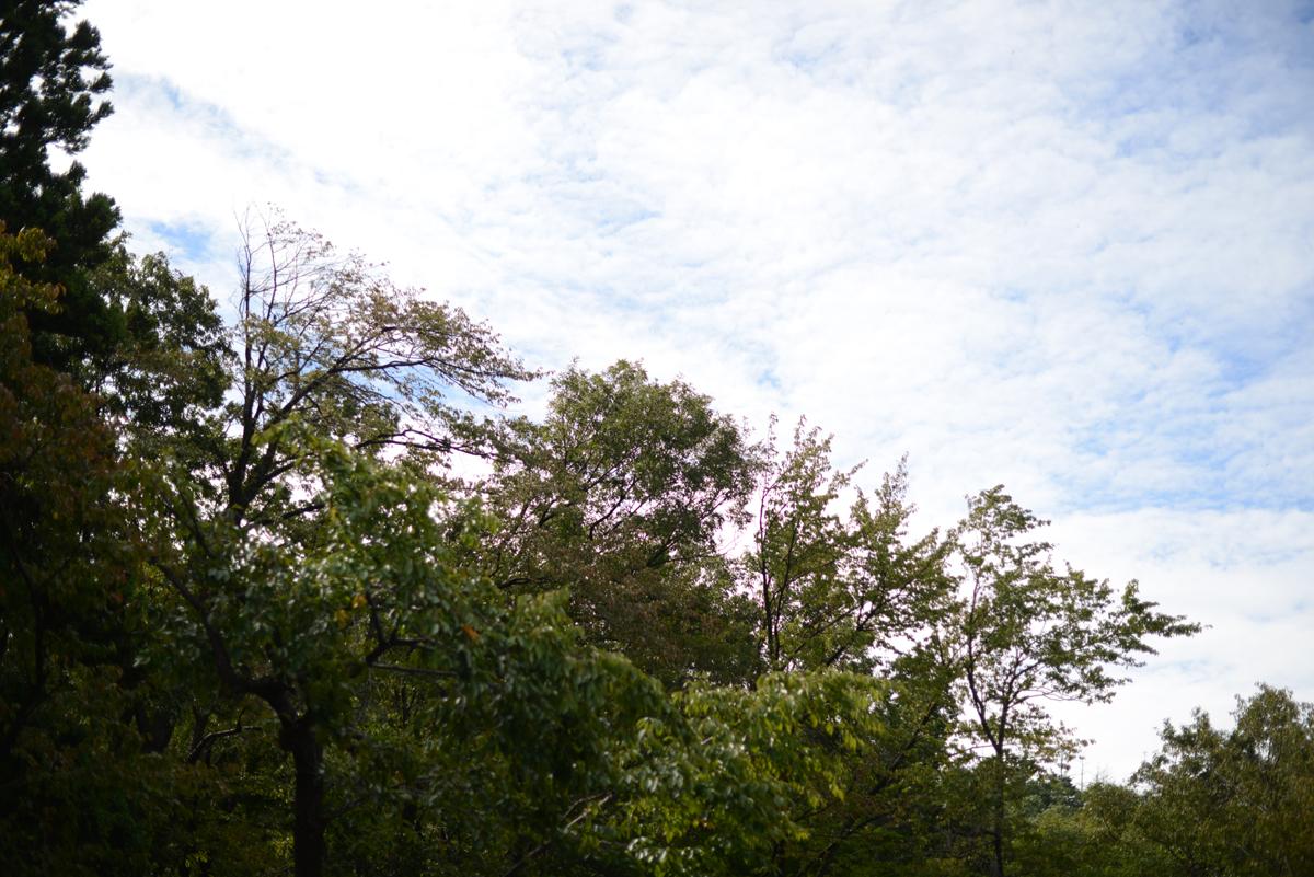 ikoi20181005-01 樹木医さんがやってくるので土を見てみる 五頭山麓いこいの森