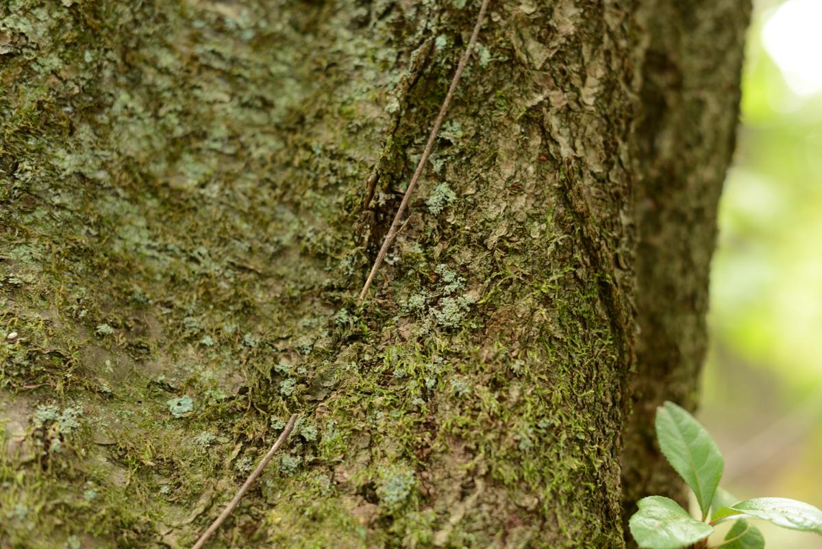 ikoi20181005-05 樹木医さんがやってくるので土を見てみる 五頭山麓いこいの森