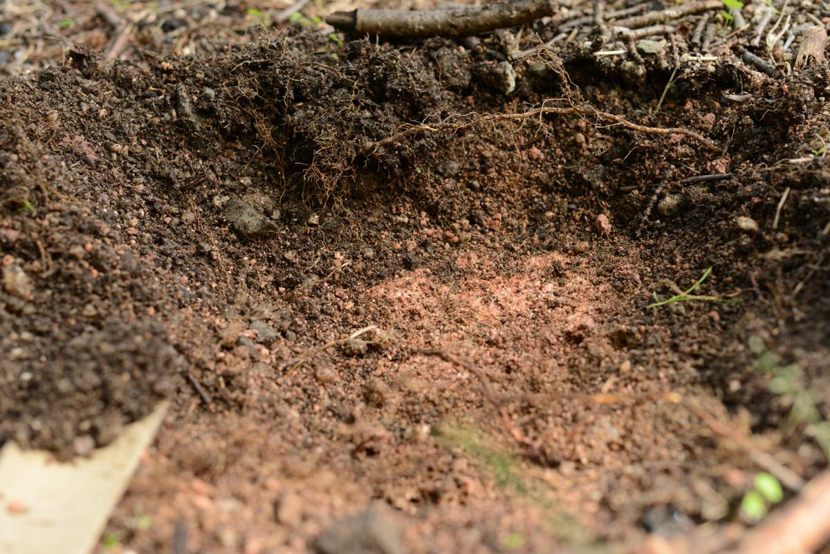 ikoi20181005-11 樹木医さんがやってくるので土を見てみる 五頭山麓いこいの森