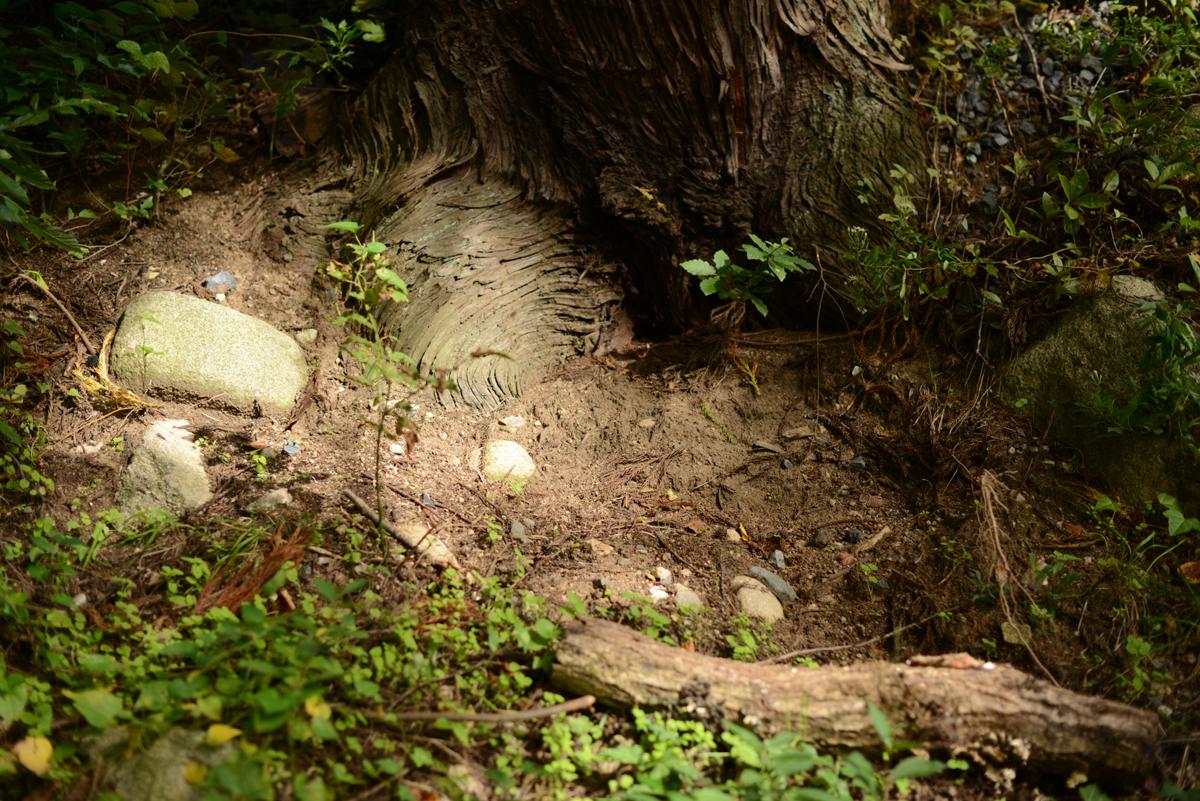 ikoi20181005-17 樹木医さんがやってくるので土を見てみる 五頭山麓いこいの森