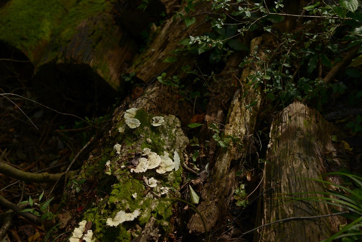 ikoi20181005-18 樹木医さんがやってくるので土を見てみる 五頭山麓いこいの森