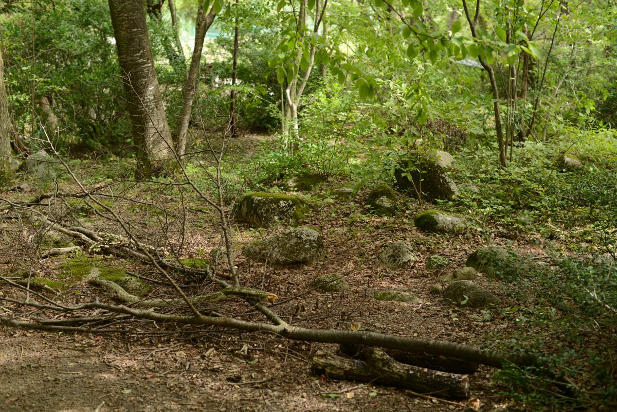 ikoi20181005-19 樹木医さんがやってくるので土を見てみる 五頭山麓いこいの森