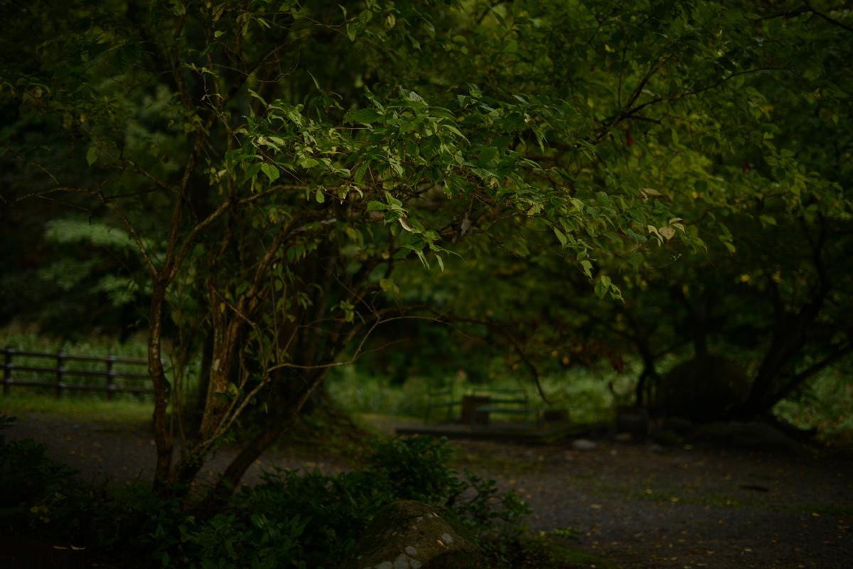 ikoi20181012-03 夕方に木を見上げてみる 五頭山麓いこいの森