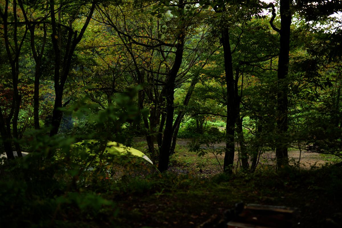ikoi20181012-04 夕方に木を見上げてみる 五頭山麓いこいの森