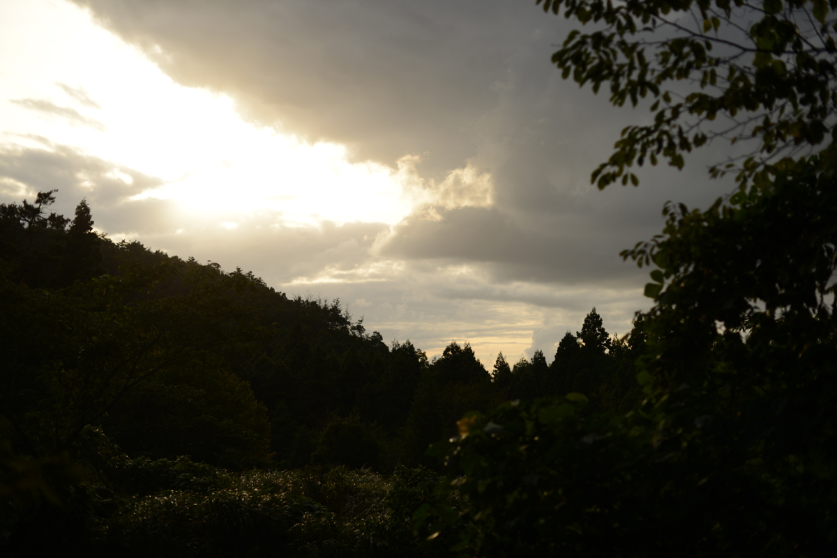ikoi20181012-09 夕方に木を見上げてみる 五頭山麓いこいの森