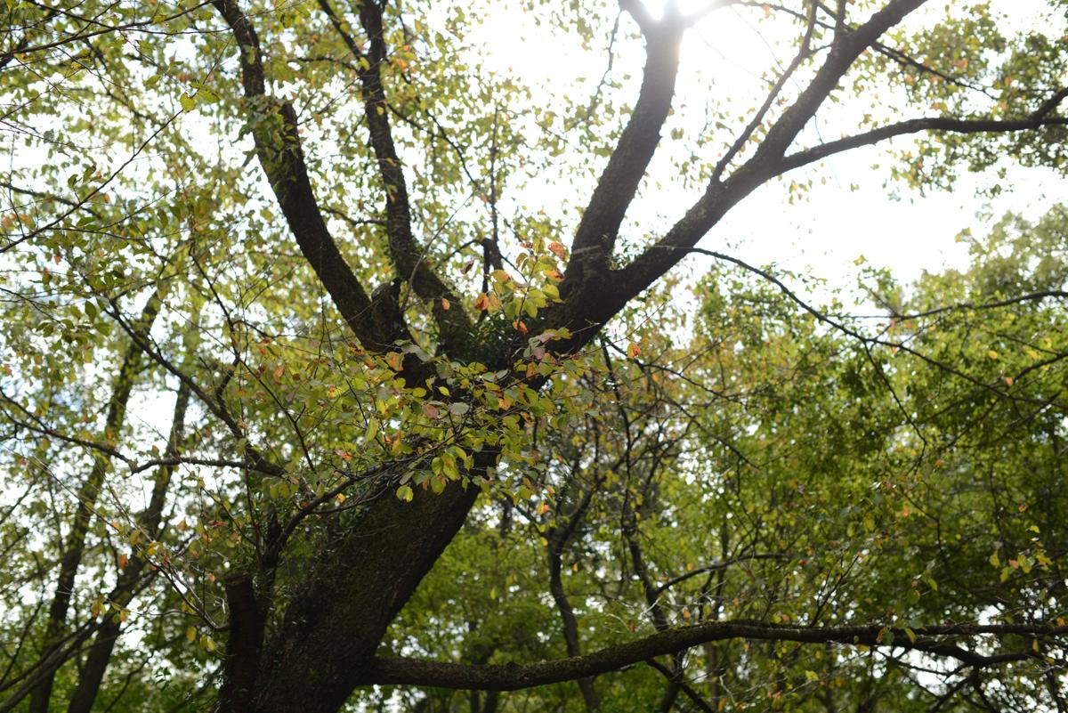 ikoi20181014-01 さわやかな秋晴れにバーベキュー 五頭山麓いこいの森