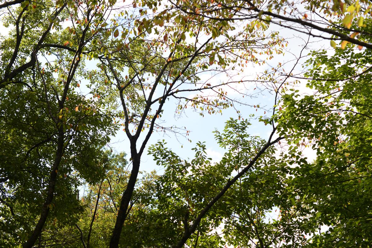 ikoi20181014-06 さわやかな秋晴れにバーベキュー 五頭山麓いこいの森