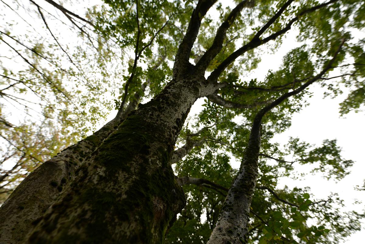ikoi20181020-01 樹木医さん来る 五頭山麓いこいの森