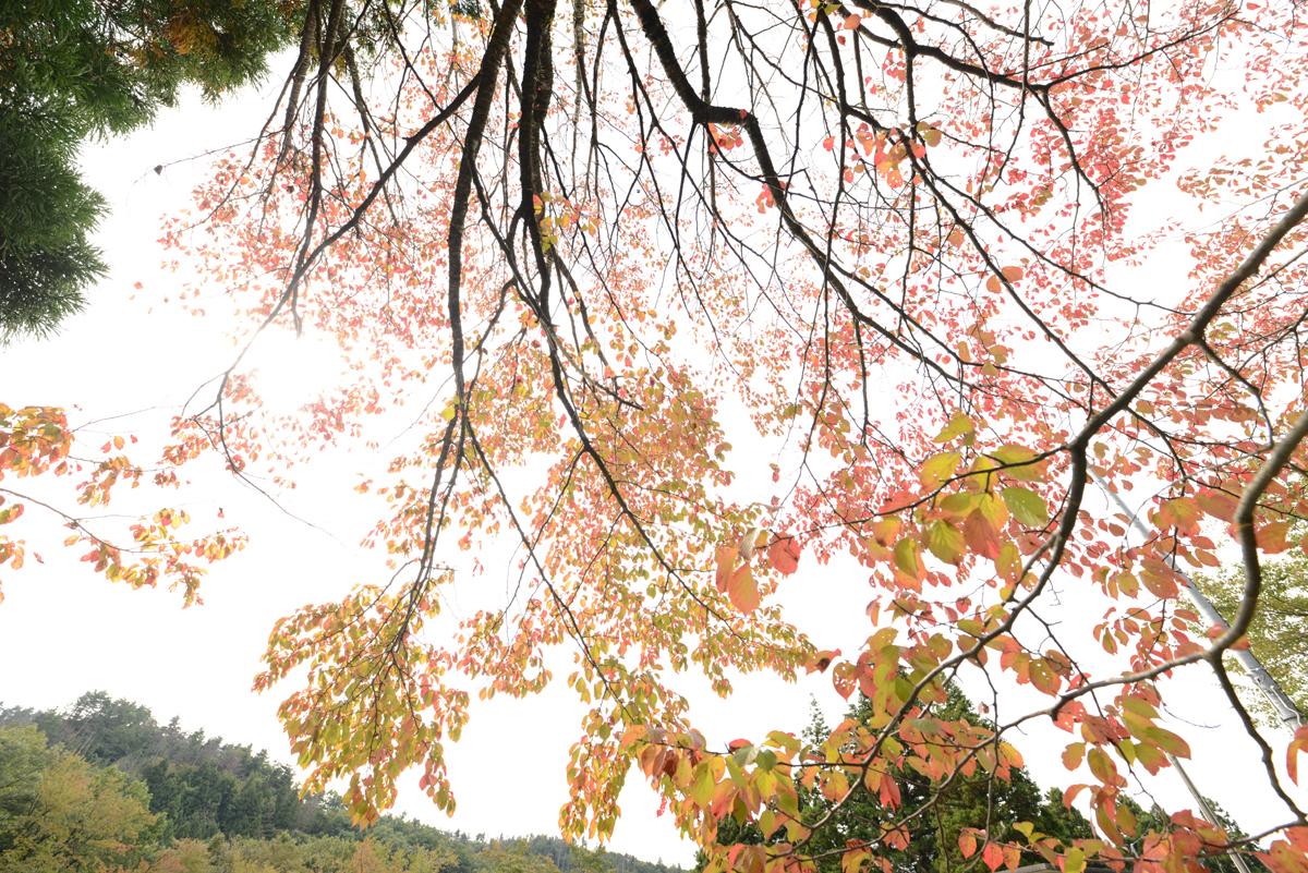 ikoi20181020-05 樹木医さん来る 五頭山麓いこいの森