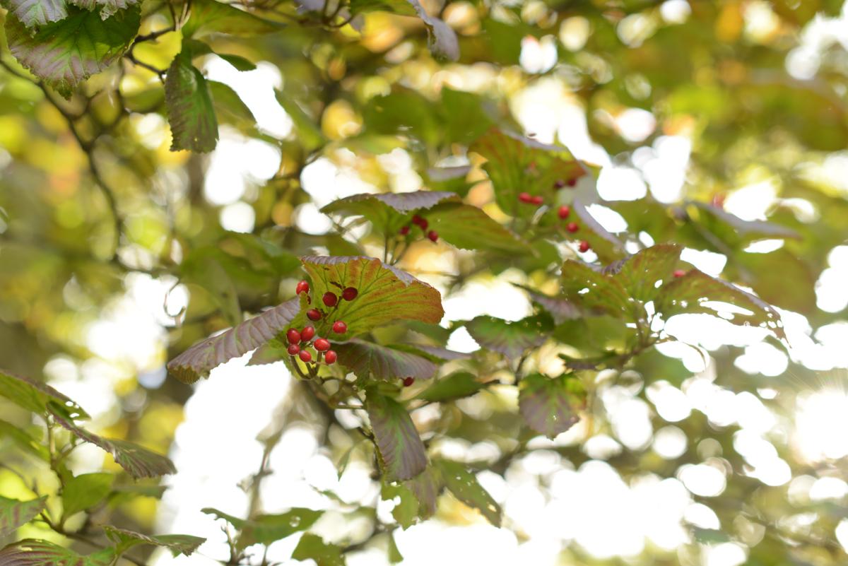 ikoi20181025-03 ドングリ食べてみた 五頭山麓いこいの森