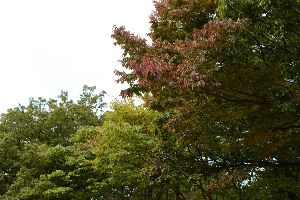 ikoi20181025-05 ドングリ食べてみた 五頭山麓いこいの森