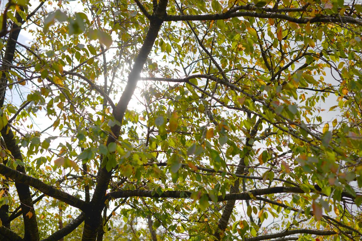 ikoi20181028-102 秋に日帰りお出かけしに行こう 五頭山麓いこいの森