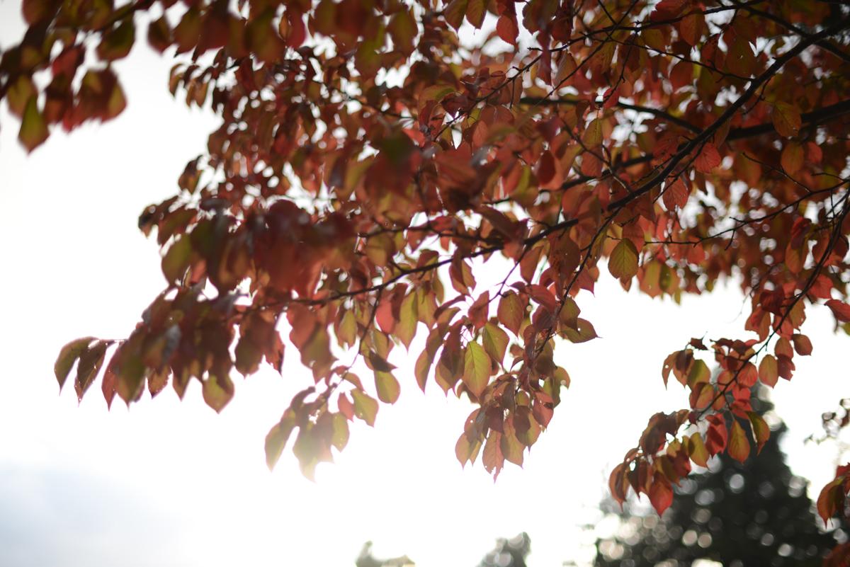 ikoi20181028-110 秋に日帰りお出かけしに行こう 五頭山麓いこいの森