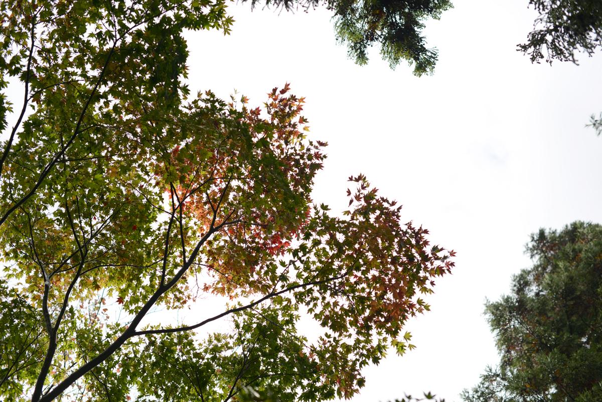 ikoi20181101-01 雨が降っても焚き火を付けたいとき 五頭山麓いこいの森