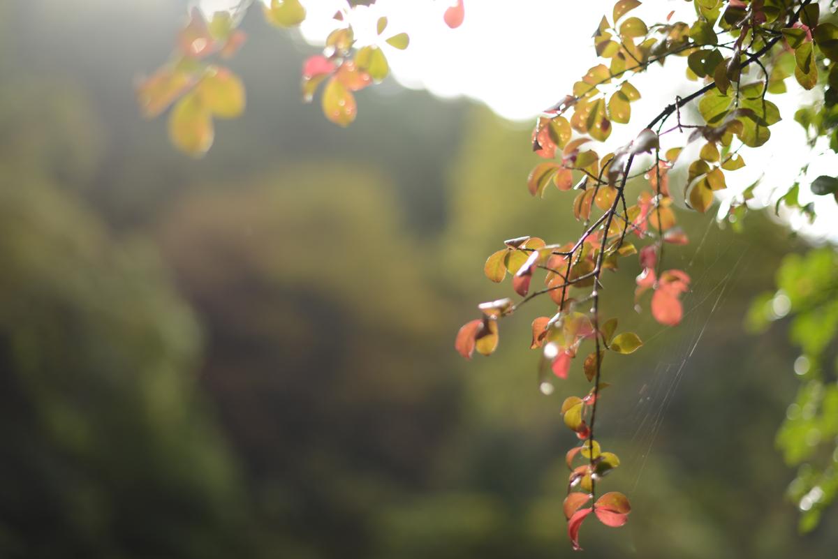 ikoi20181101-03 雨が降っても焚き火を付けたいとき 五頭山麓いこいの森
