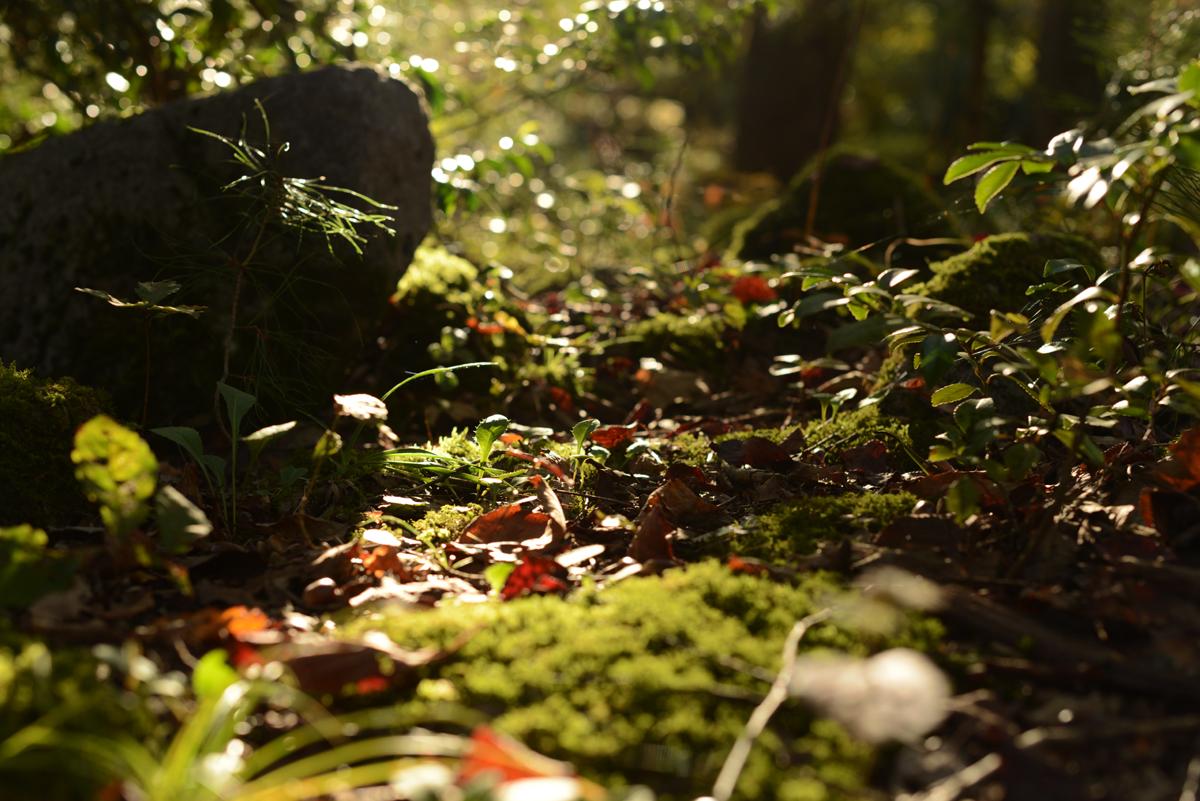 ikoi20181105-02 落ち葉が増えてきた 五頭山麓いこいの森