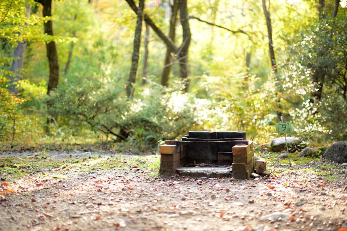 ikoi20181105-03 落ち葉が増えてきた 五頭山麓いこいの森