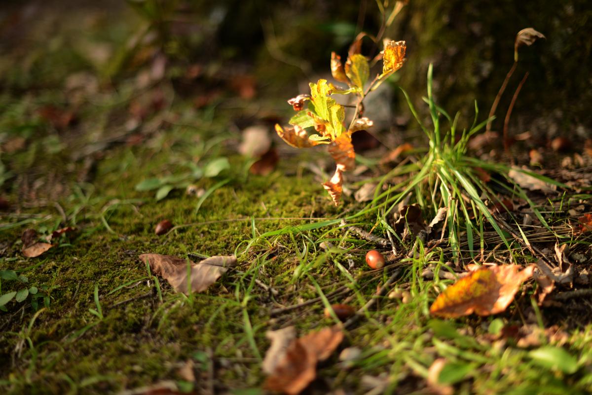 ikoi20181105-04 落ち葉が増えてきた 五頭山麓いこいの森