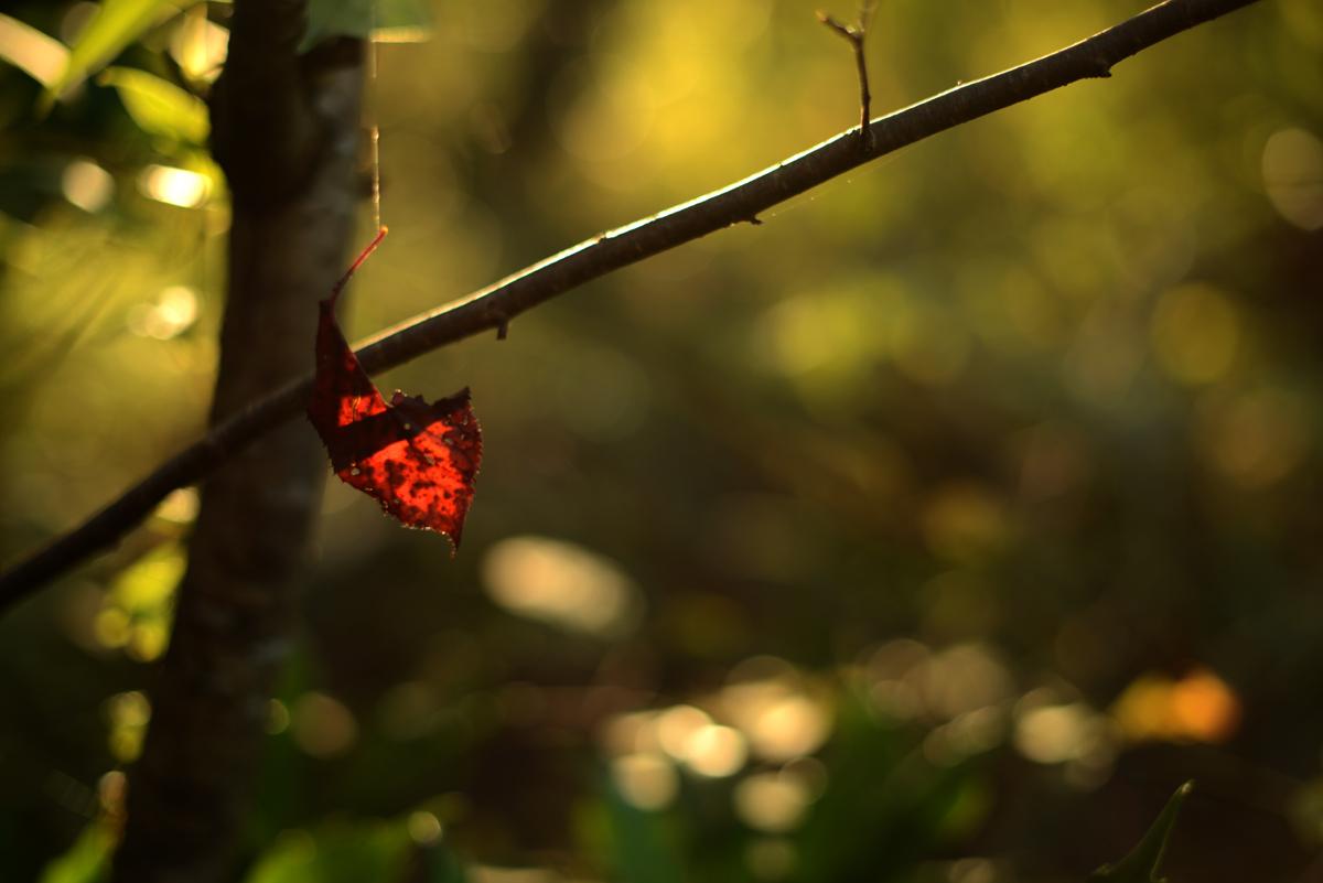 ikoi20181105-09 落ち葉が増えてきた 五頭山麓いこいの森