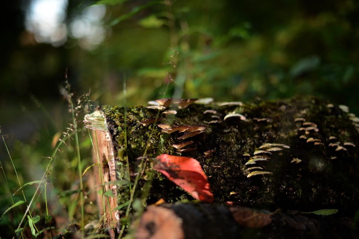 ikoi20181105-11 落ち葉が増えてきた 五頭山麓いこいの森