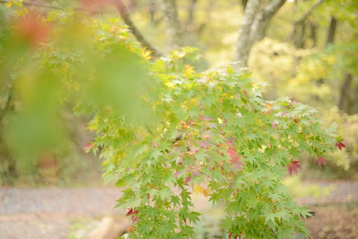 ikoi20181115-01 あと半月したら閉園 五頭山麓いこいの森