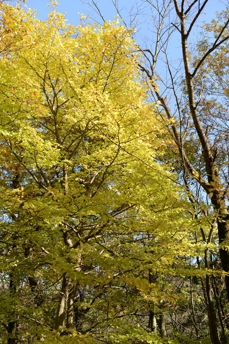 ikoi20181118-04 木を手入れする 五頭山麓いこいの森
