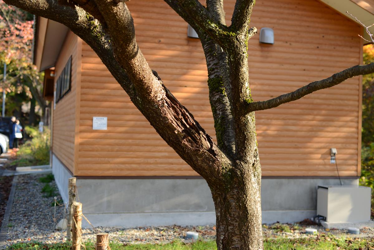 ikoi20181118-12 木を手入れする 五頭山麓いこいの森