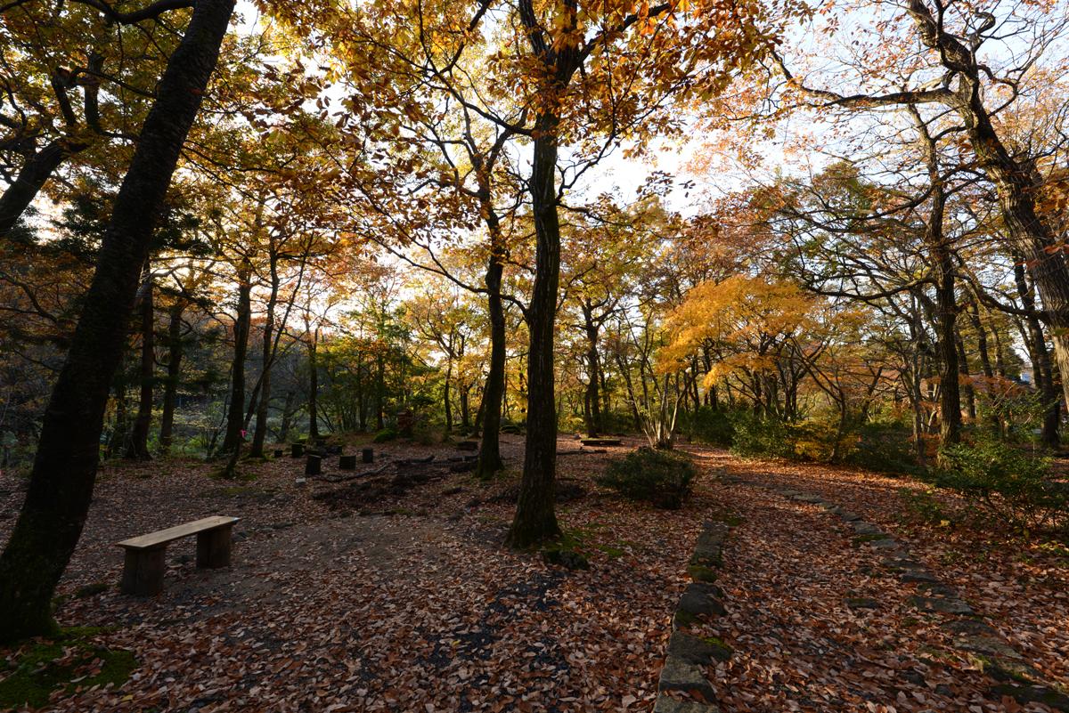 ikoi20181126-04 黄色の葉っぱだらけ 五頭山麓いこいの森