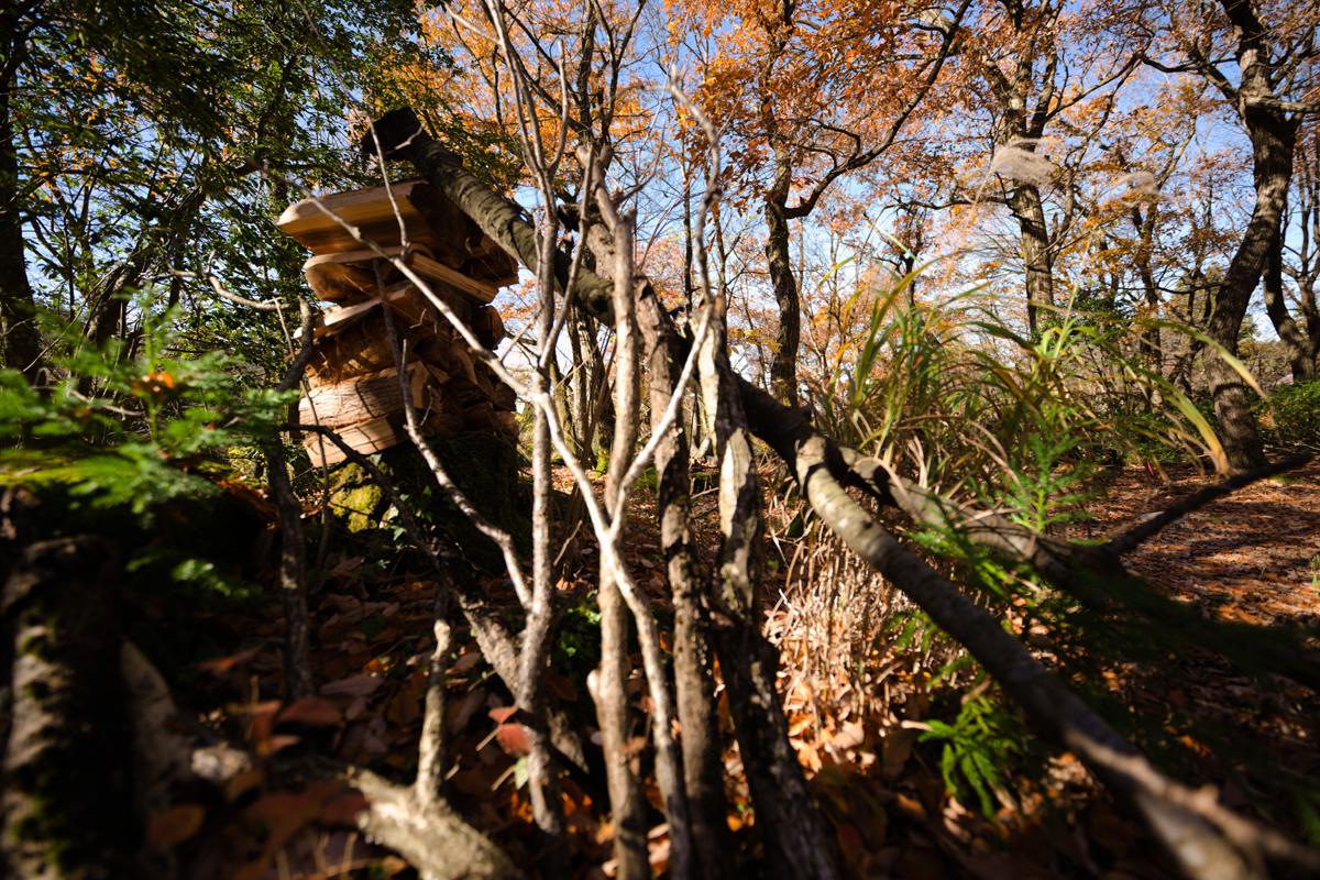 ikoi20181202-04 小春日和 五頭山麓いこいの森
