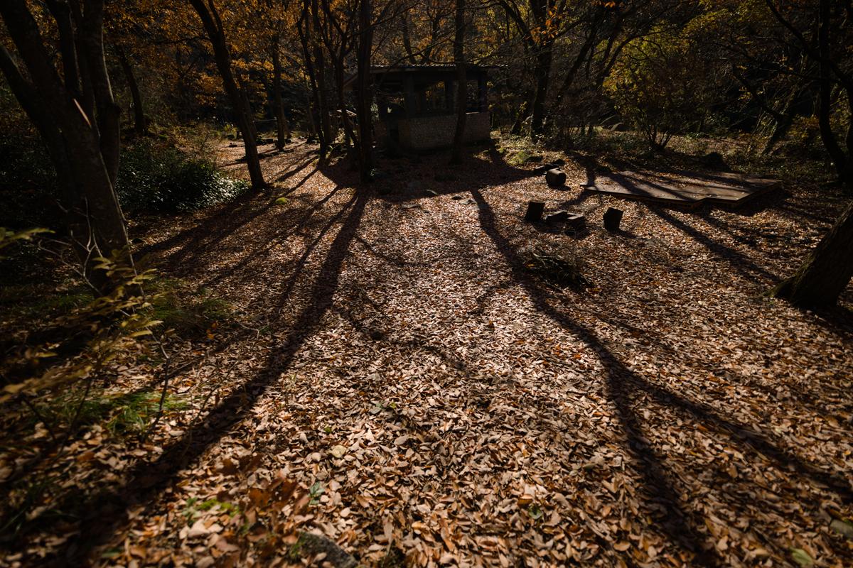ikoi20181202-06 小春日和 五頭山麓いこいの森