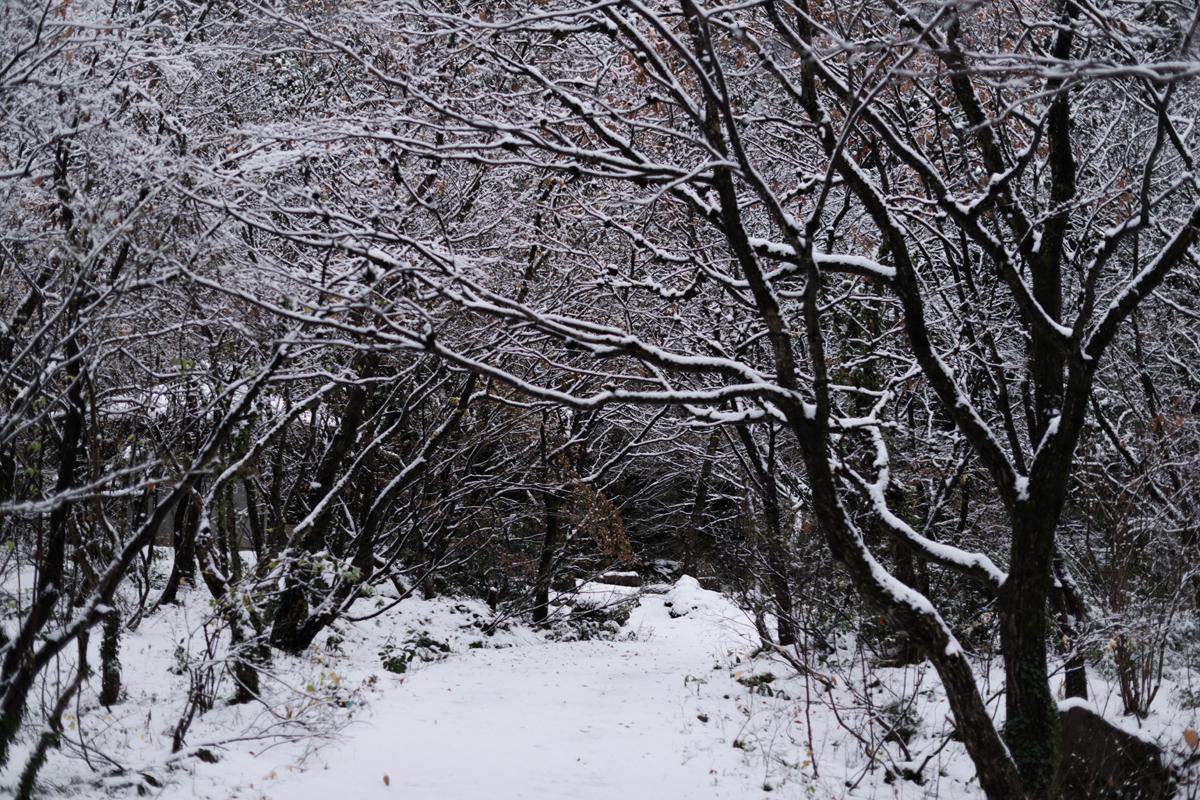 ikoi20181209-01 雪が降った 五頭山麓いこいの森