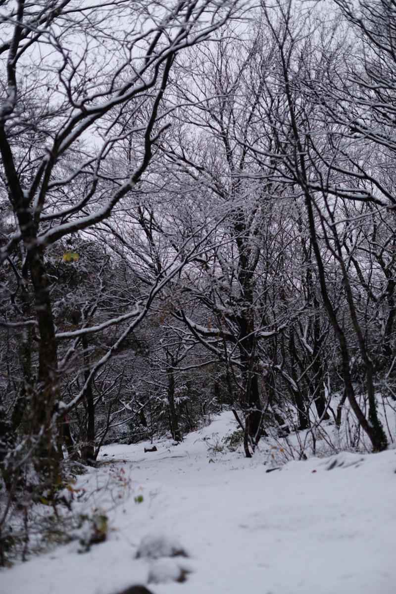ikoi20181209-03 雪が降った 五頭山麓いこいの森