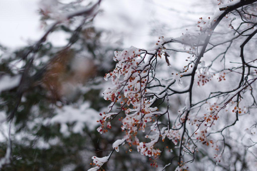 ikoi20181209-04-1024x683 雪が降った 五頭山麓いこいの森
