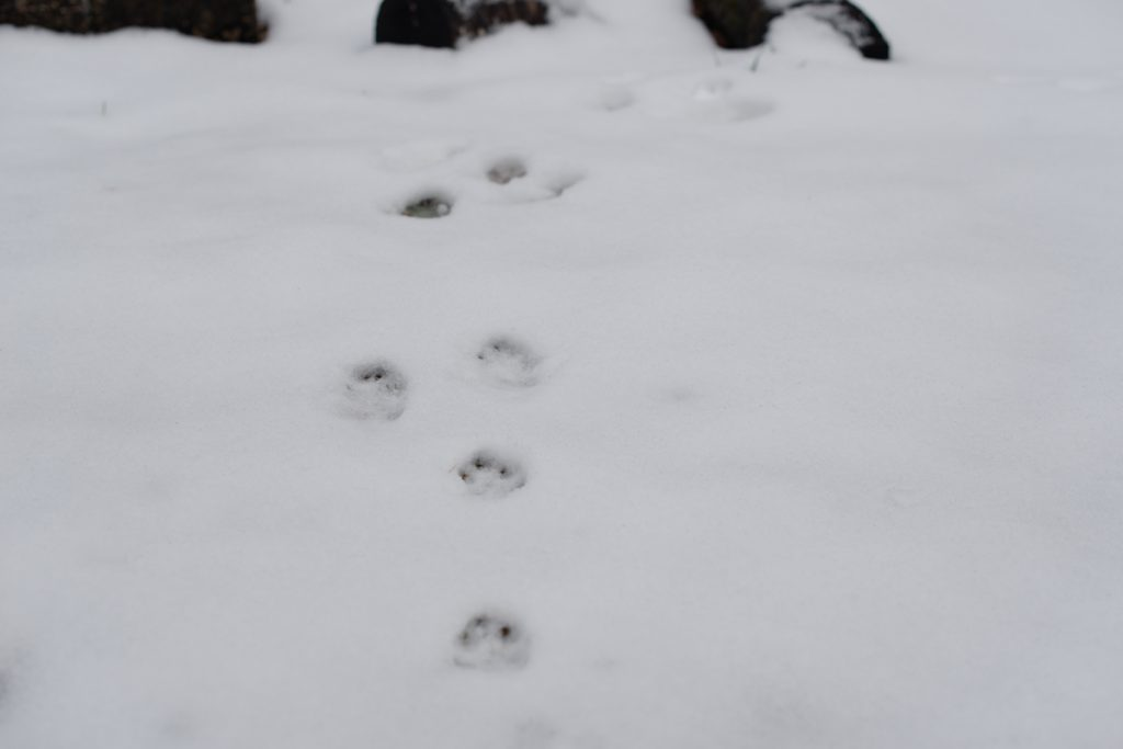 ikoi20181216-005-1024x683 今年はまだ雪が少ないので大荒川の写真を撮ってきました 五頭山麓いこいの森