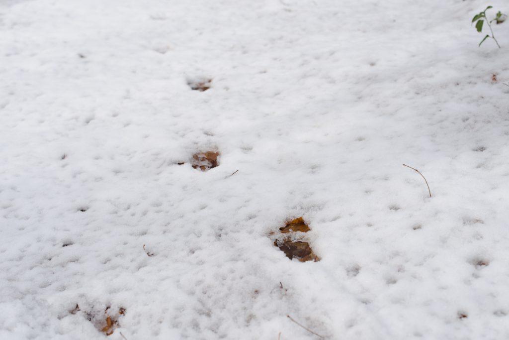 ikoi20181216-007-1-1024x683 今年はまだ雪が少ないので大荒川の写真を撮ってきました 五頭山麓いこいの森