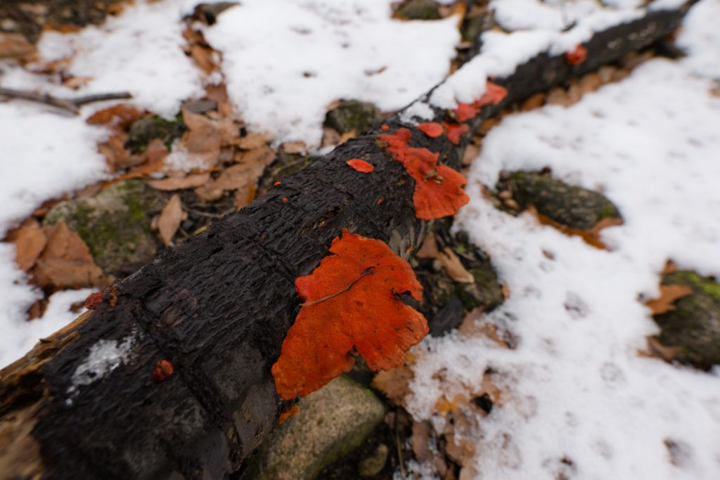 ikoi20181216-010-1024x683 今年はまだ雪が少ないので大荒川の写真を撮ってきました 五頭山麓いこいの森