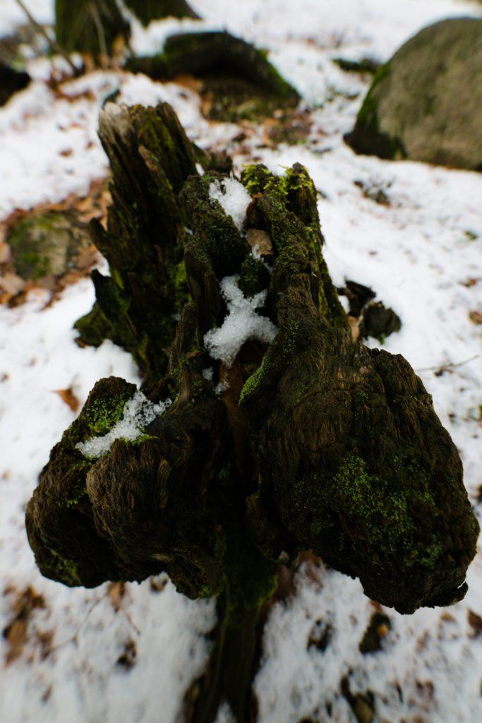 ikoi20181216-011-683x1024 今年はまだ雪が少ないので大荒川の写真を撮ってきました 五頭山麓いこいの森