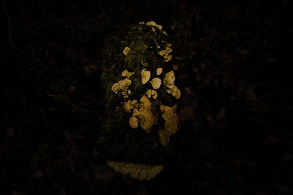 ikoi20181220-03-1024x683 森の中で捜し物 五頭山麓いこいの森