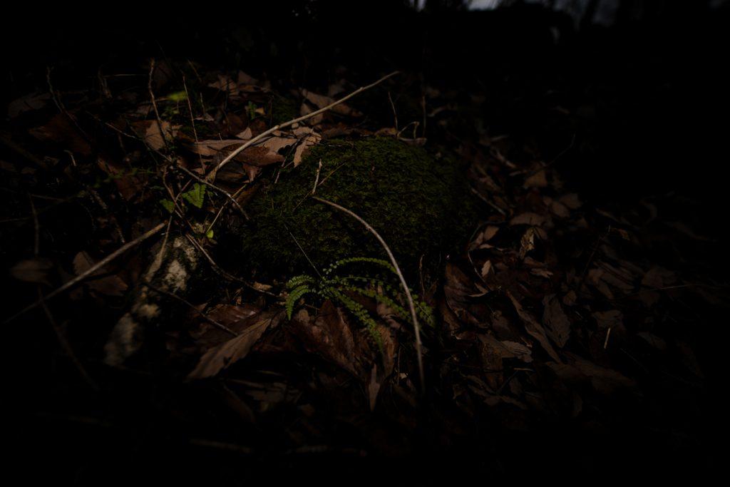 ikoi20181220-04-1024x683 森の中で捜し物 五頭山麓いこいの森