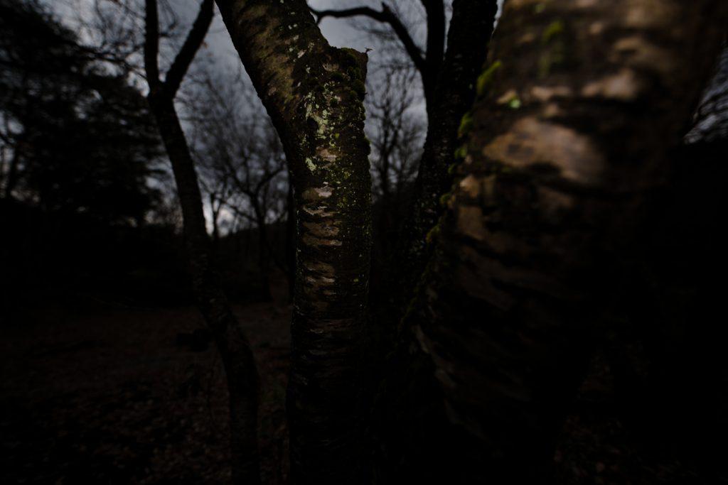 ikoi20181220-05-1024x683 森の中で捜し物 五頭山麓いこいの森