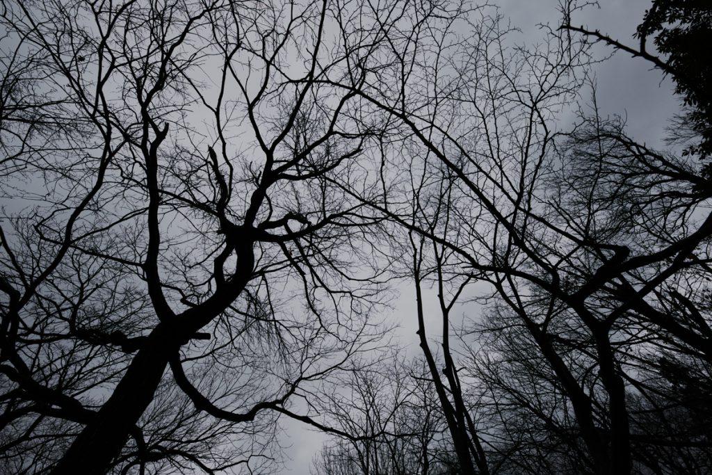 ikoi20181224-13-1024x683 怪しげな森の中 五頭山麓いこいの森