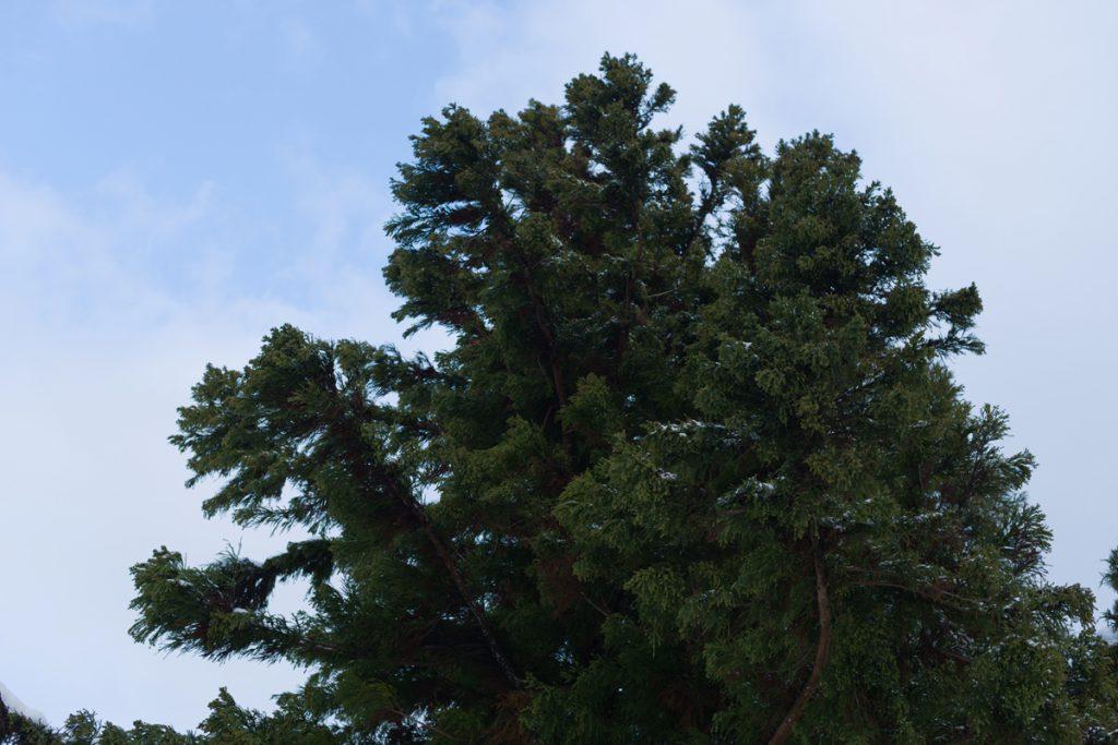 DSC_6437-1024x683 明けましておめでとうございます 五頭山麓いこいの森