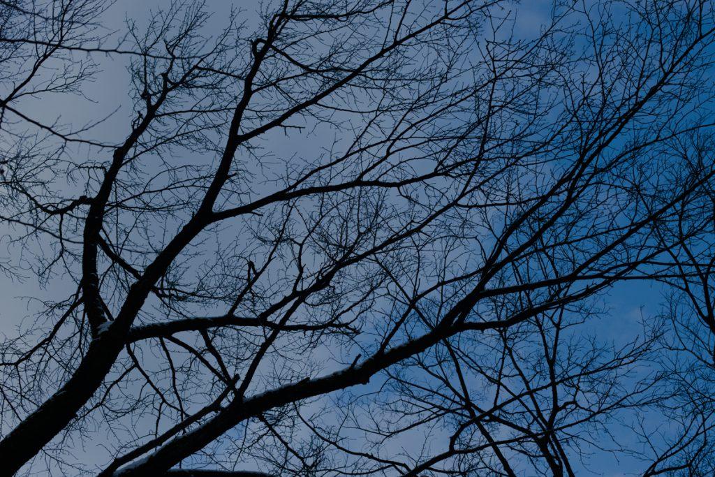 DSC_6438-1024x683 明けましておめでとうございます 五頭山麓いこいの森