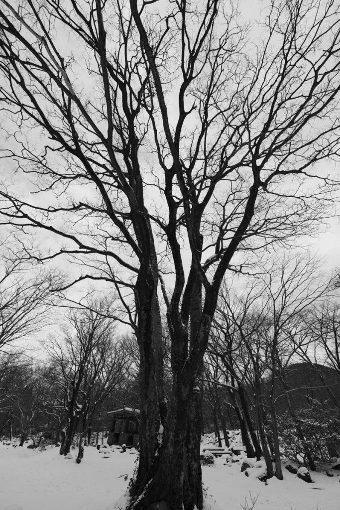 DSC_6455-683x1024 明けましておめでとうございます 五頭山麓いこいの森
