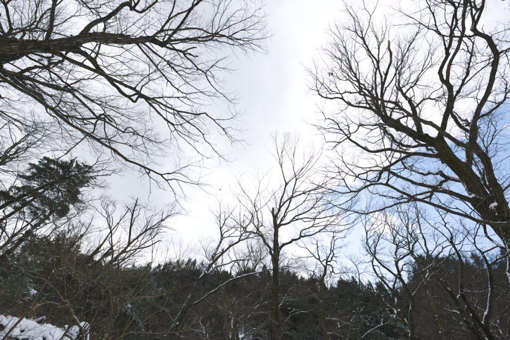 DSC_6461-1024x683 明けましておめでとうございます 五頭山麓いこいの森