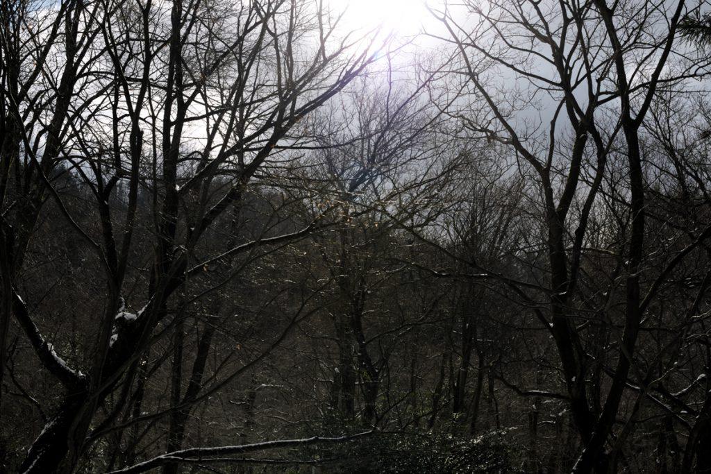 DSC_6518-1024x683 明けましておめでとうございます 五頭山麓いこいの森