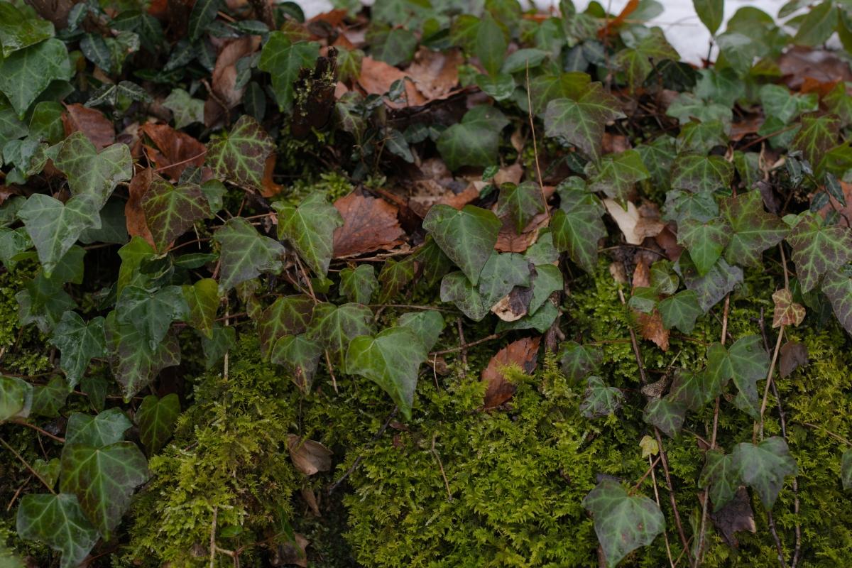 DSC_6646 お正月らしく 五頭山麓いこいの森