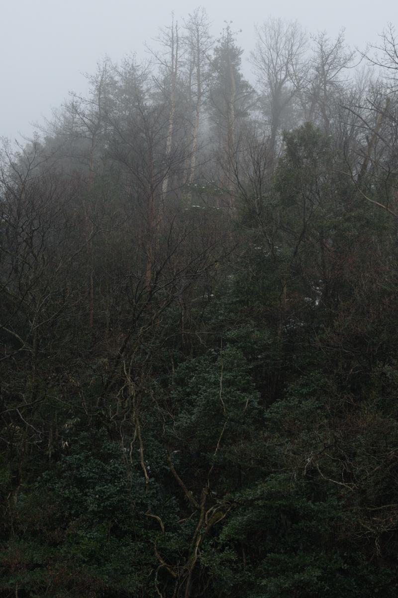 DSC_6677 お正月らしく 五頭山麓いこいの森