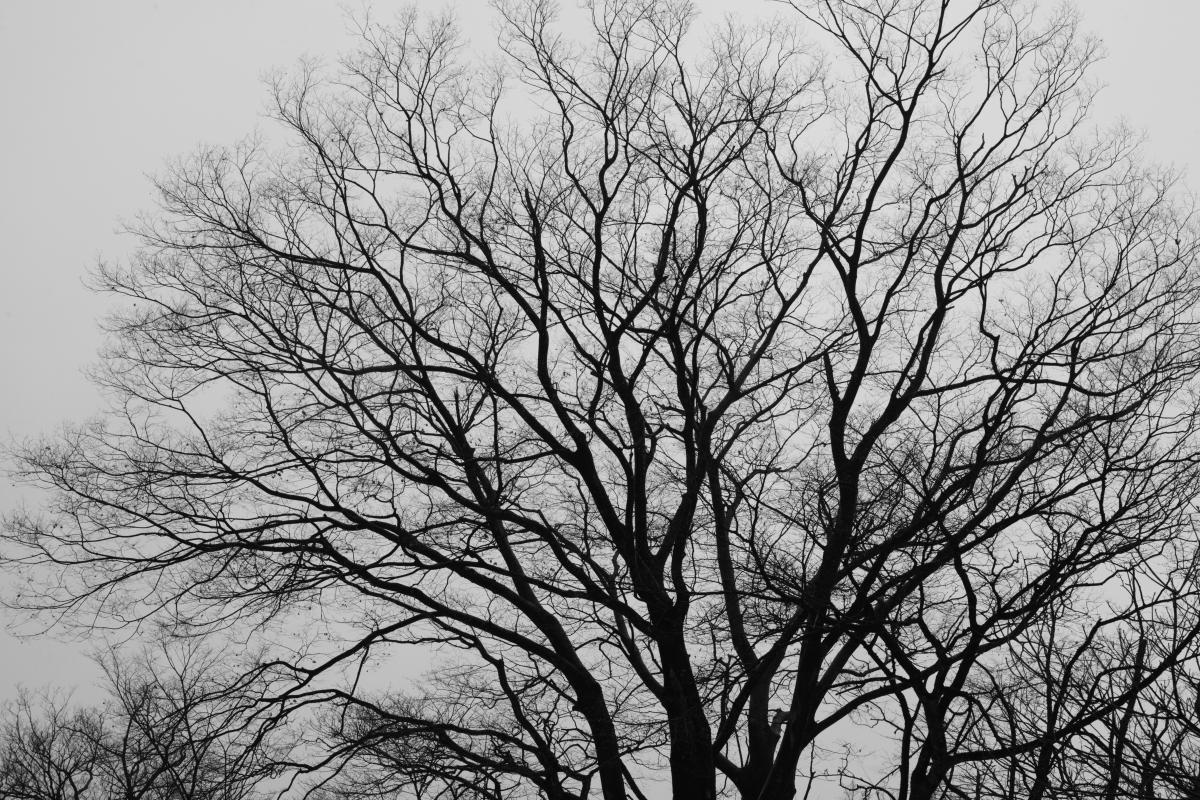 DSC_6687 お正月らしく 五頭山麓いこいの森